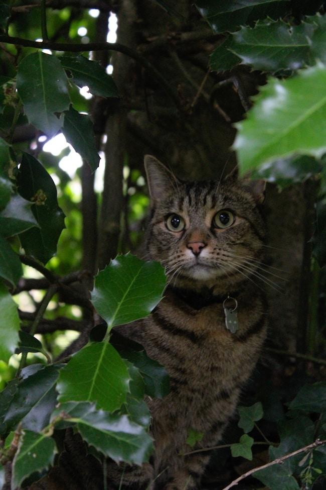 mabel in bush