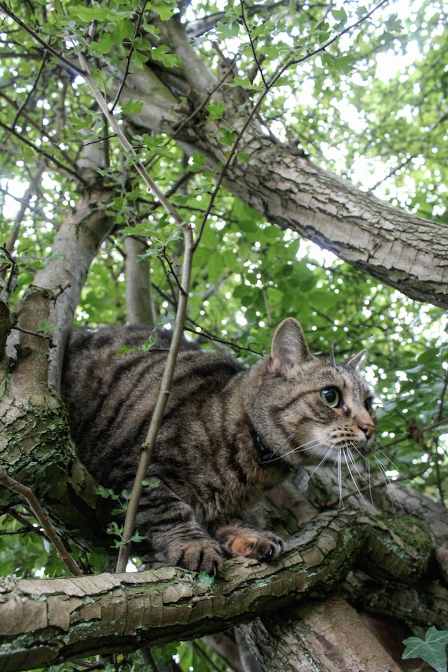 mable in tree